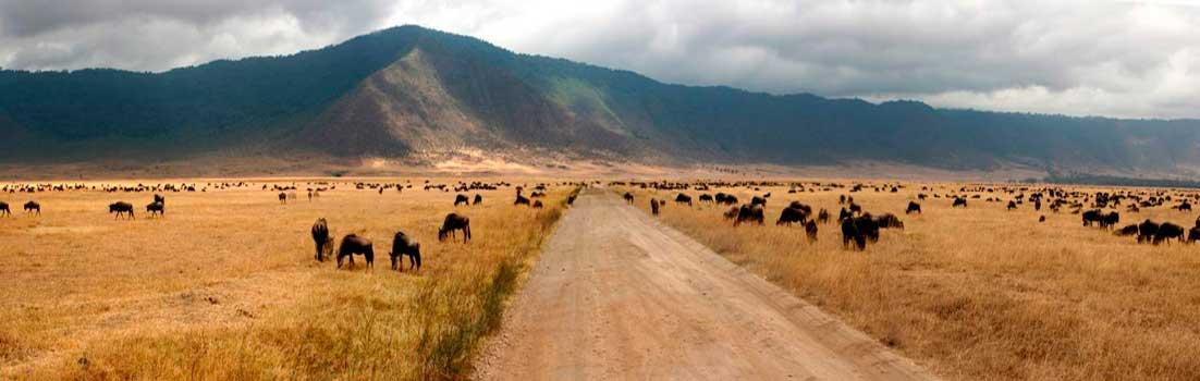 Panorámica de Ngorongoro