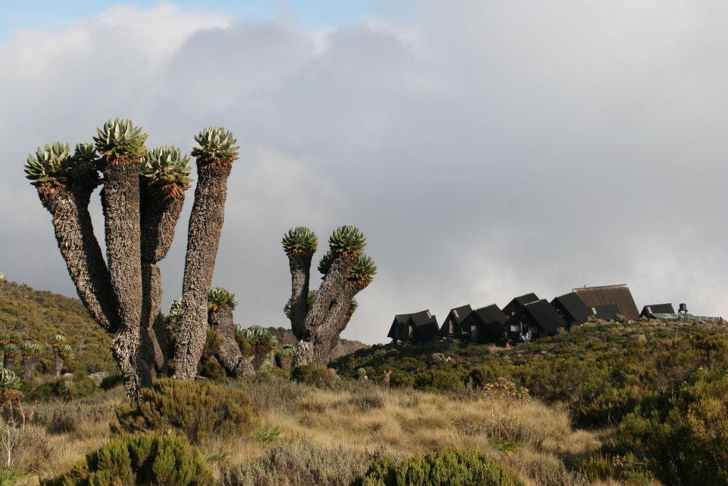 Kilimanjaro - 2do día