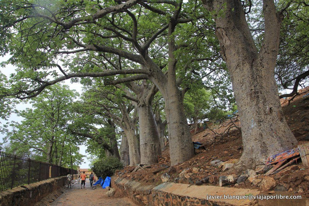 Camino de los baobabs