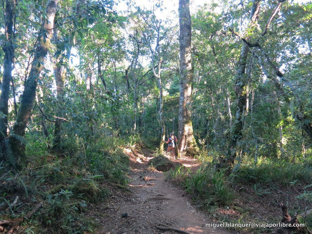 Selva en Rinjani