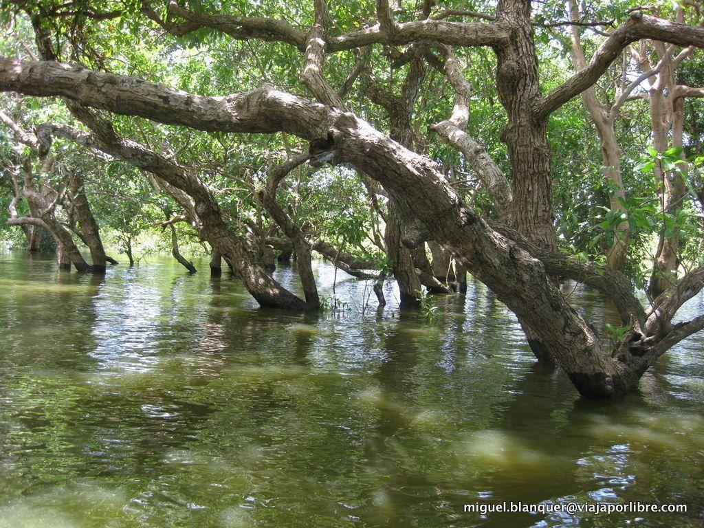 Bosque cercano a Chong Kneas