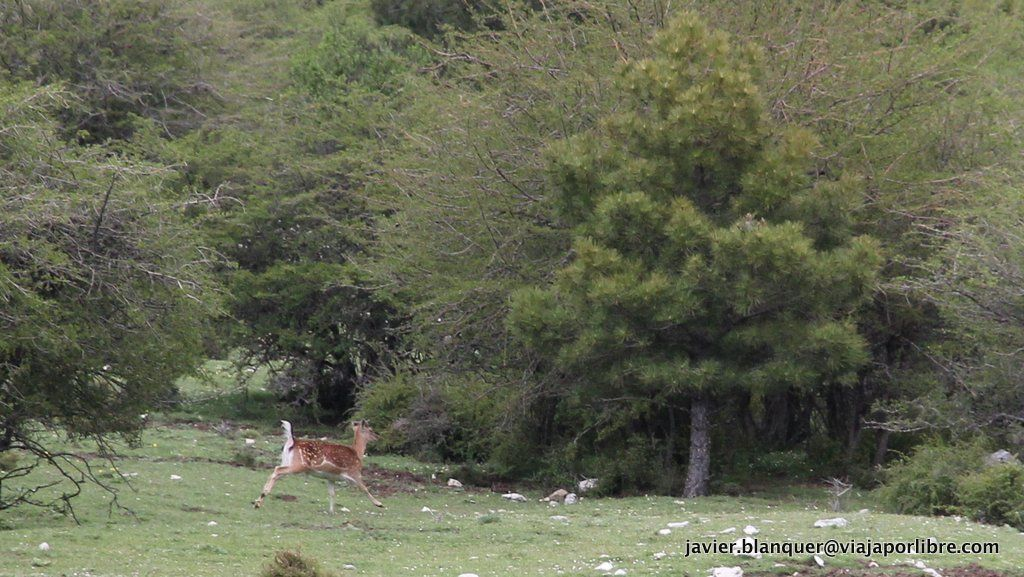 Fauna en Cazorla