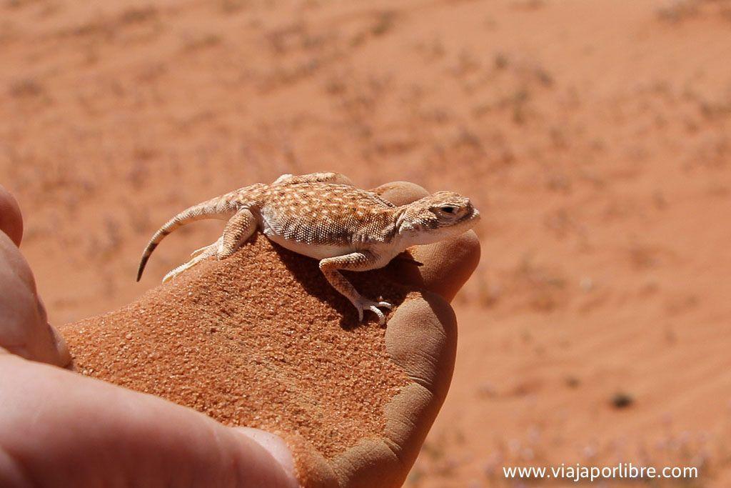 Grata compañía en Wadi Rum