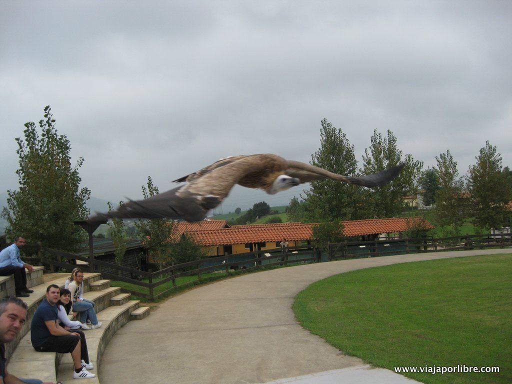 Exhibición de aves