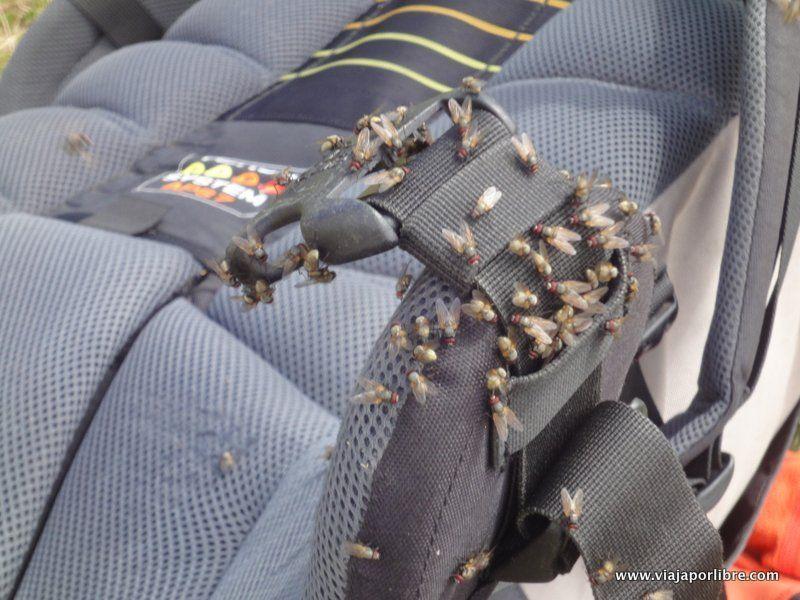 Odiosas moscas