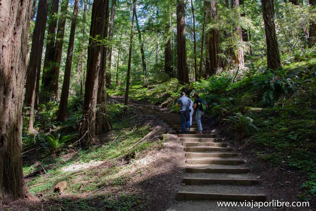 Bosque de secuoyas de Muir Woods