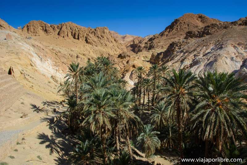 Oasis de Chebika - Tunez