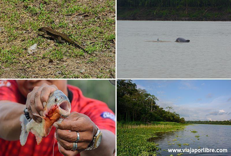 Viajar al Amazonas -Iquitos