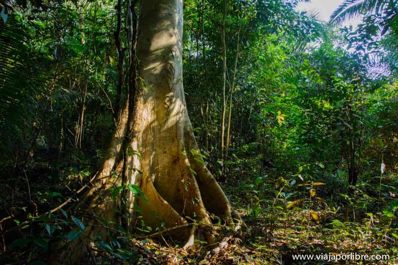 Selva Amazónica - Perú