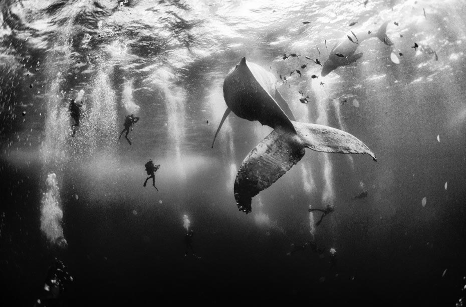 El encantador de Ballenas - Autor : Anuar Patjane Floriuk