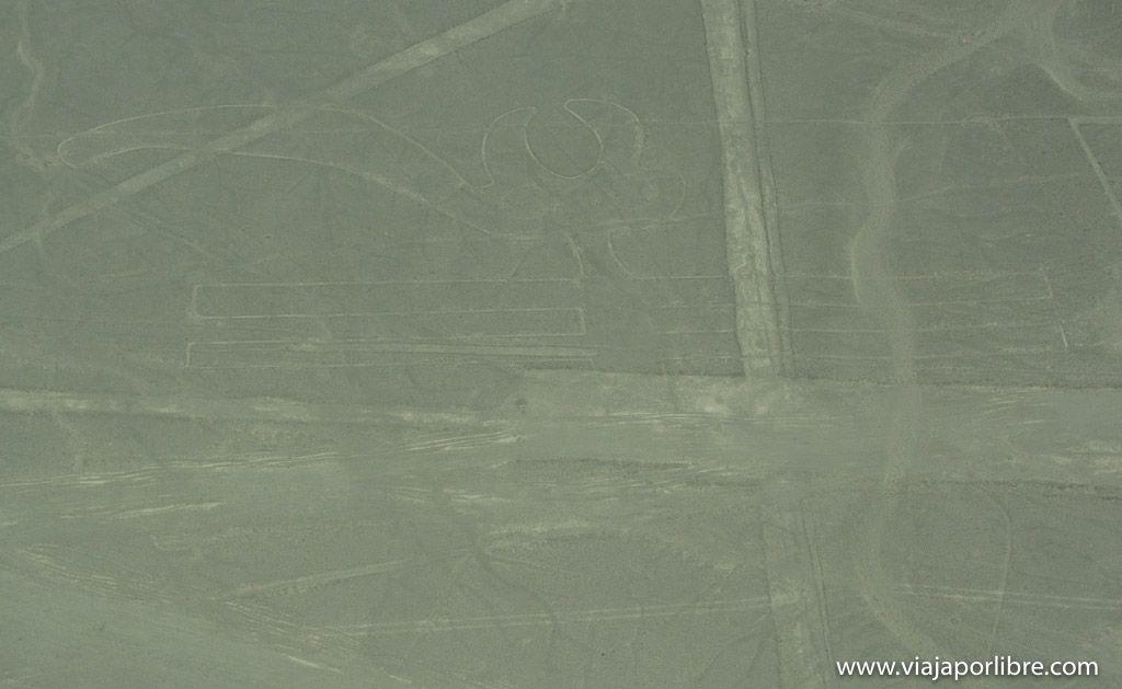 El tucán - Líneas de Nazca del Perú