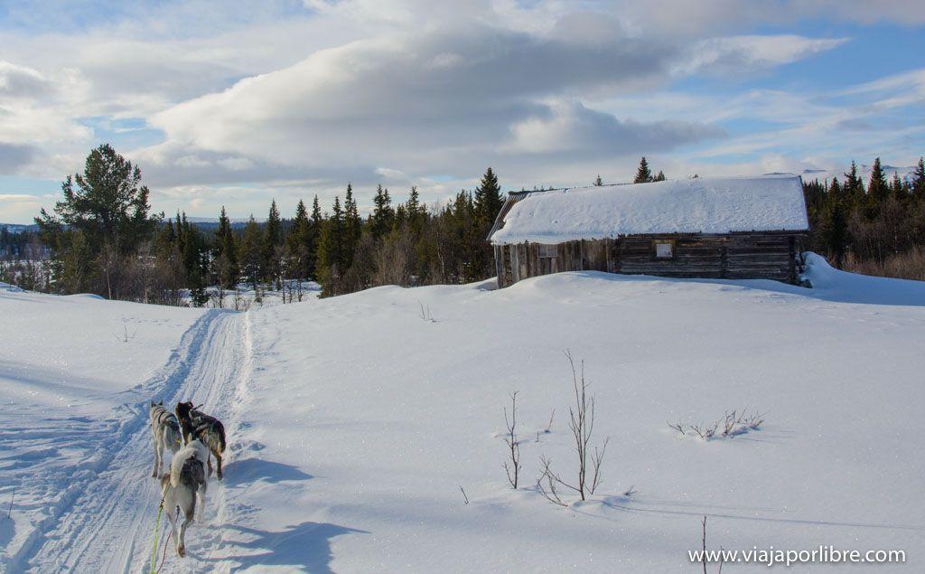 Trineos de Perros en Noruega