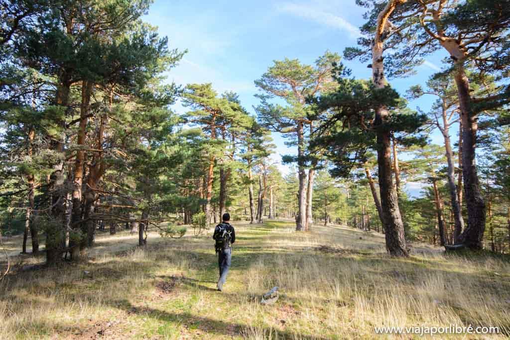Por los bosques de Guadarrama hacia la Pinareja