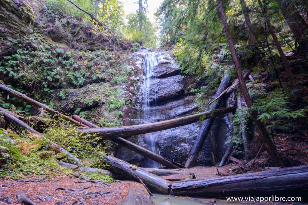 Big Basin Redwoods
