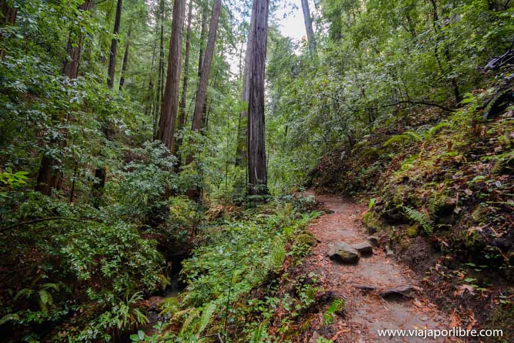 Big Basin Redwoods - Secuoyas en San Francisco