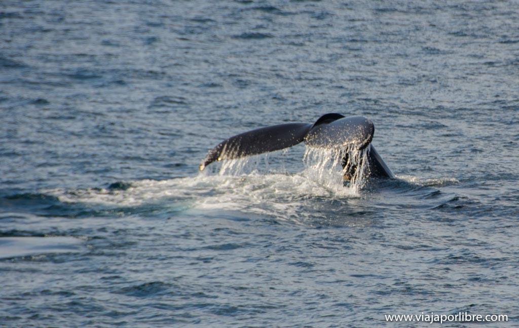 El espectacular avistamiento de ballenas en Monterrey