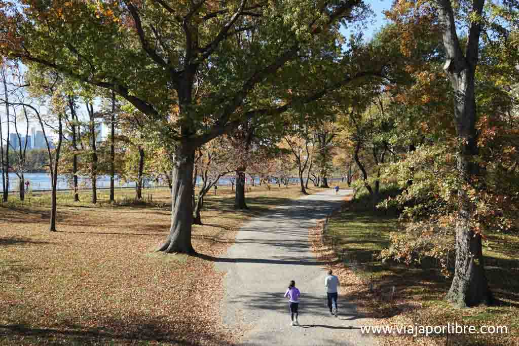 Central park el paraíso de los runners