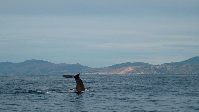 Lo mejor de la isla sur de Nueva Zelanda - Imagen de Wikipedia