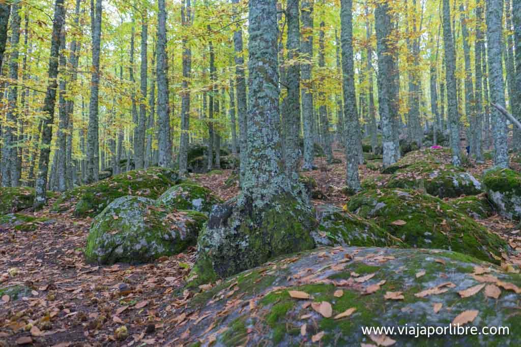 Castañar de El Tiemblo en otoño