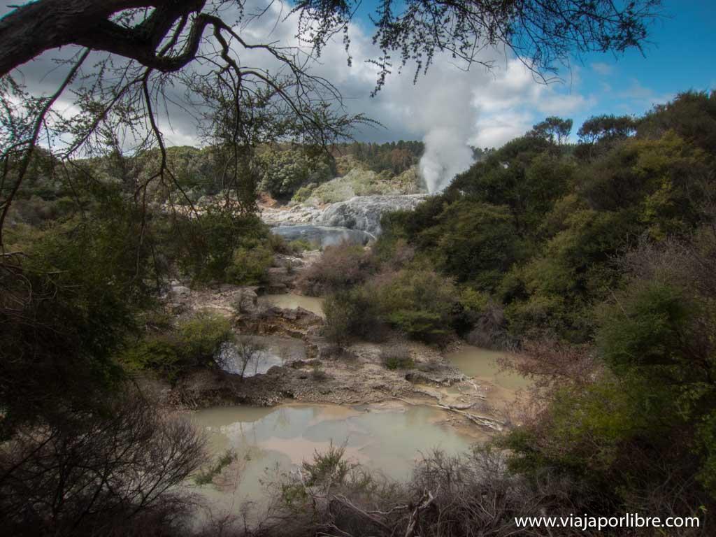 Te Puia. Maoríes y zonas termales en Rotorua