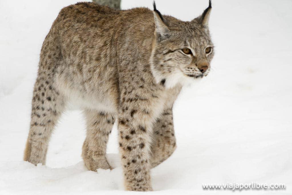 Polar Park Wildlife Reserve
