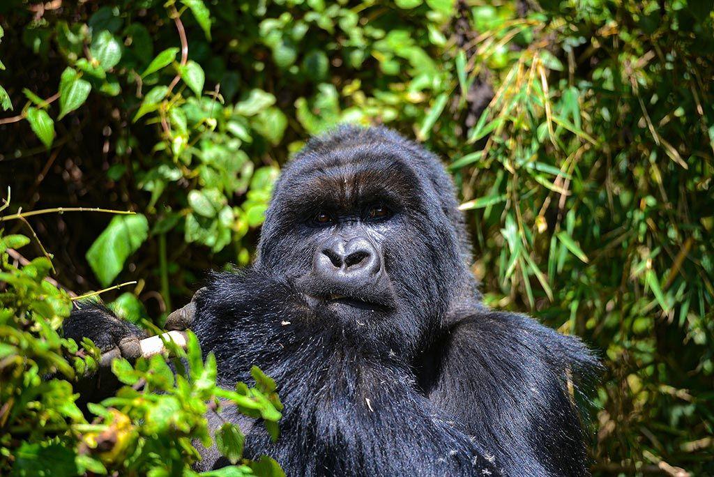Viajar a Uganda en 14 días