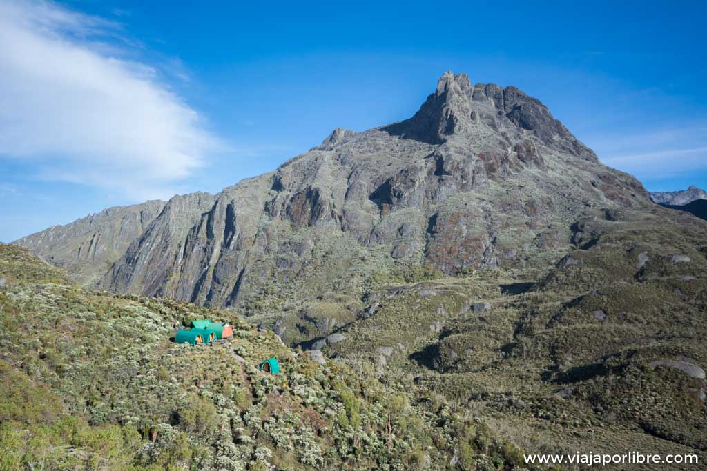 Rwenzori – Etapa 5. Hunwick's camp a Marguerita Camp