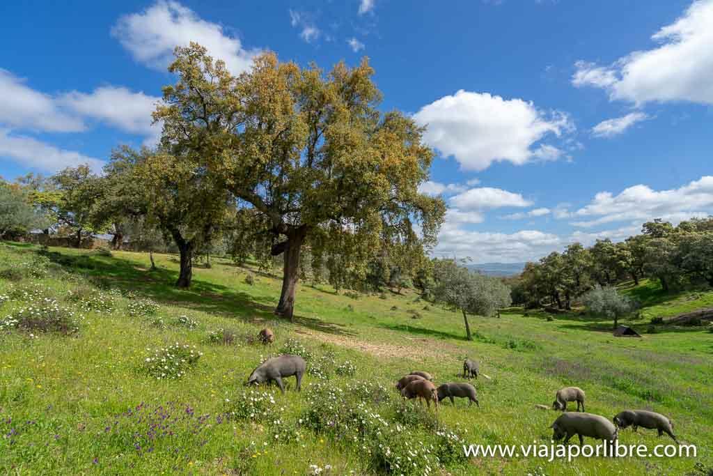Dehesas de Huelva - Eiriz