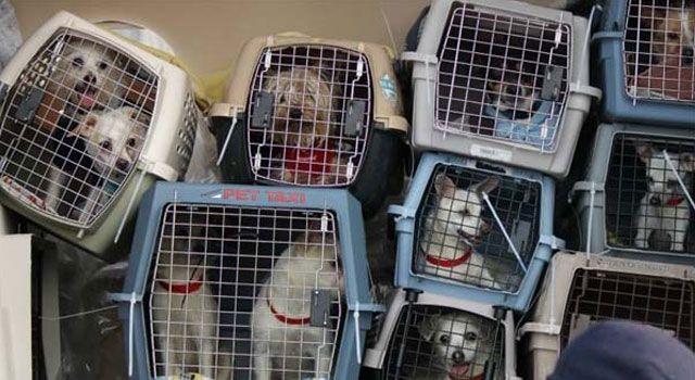 Perros en un avión
