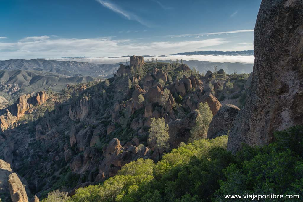 Condors de California, Pinnacles National Park