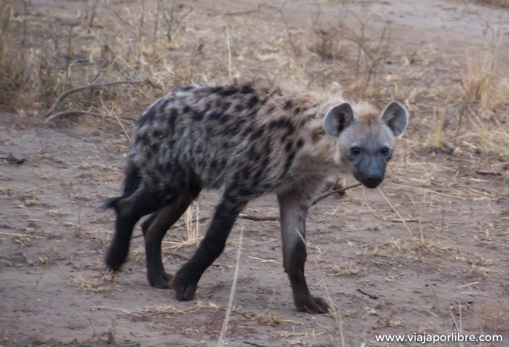 Safari en Uganda en Queen Elizabeth Park
