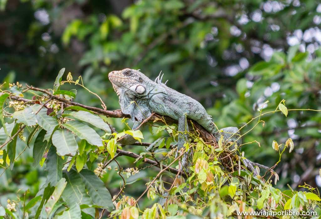 Ruta del salto del águila en Caño Cristales - Colombia