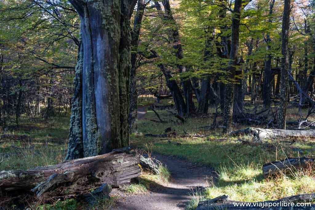 Ruta a la Laguna Torre en el Chaltén