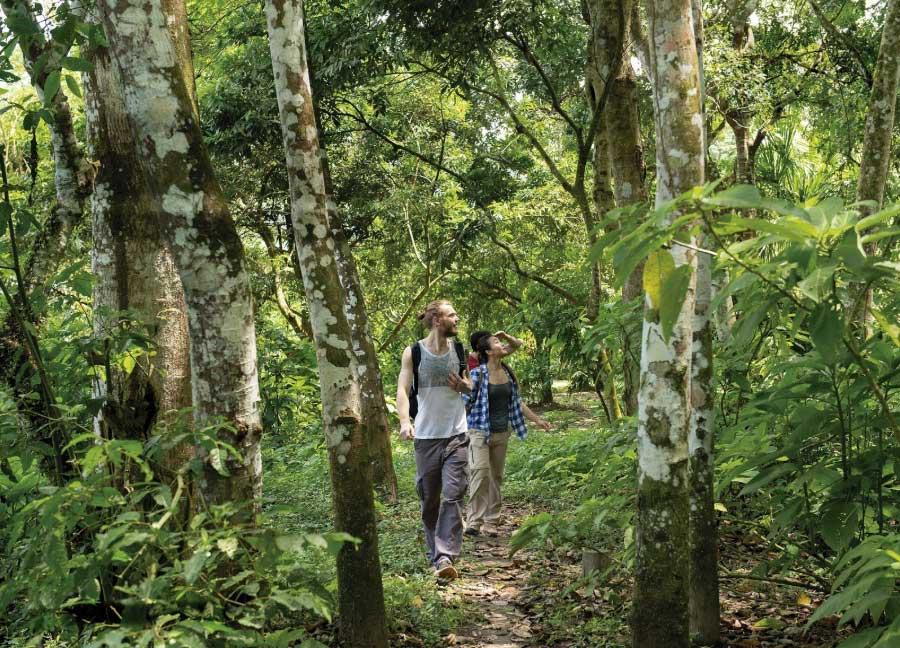 Caminata en la selva: Caminata en la selva, Loreto © Leonel Ortiz / PromPerú