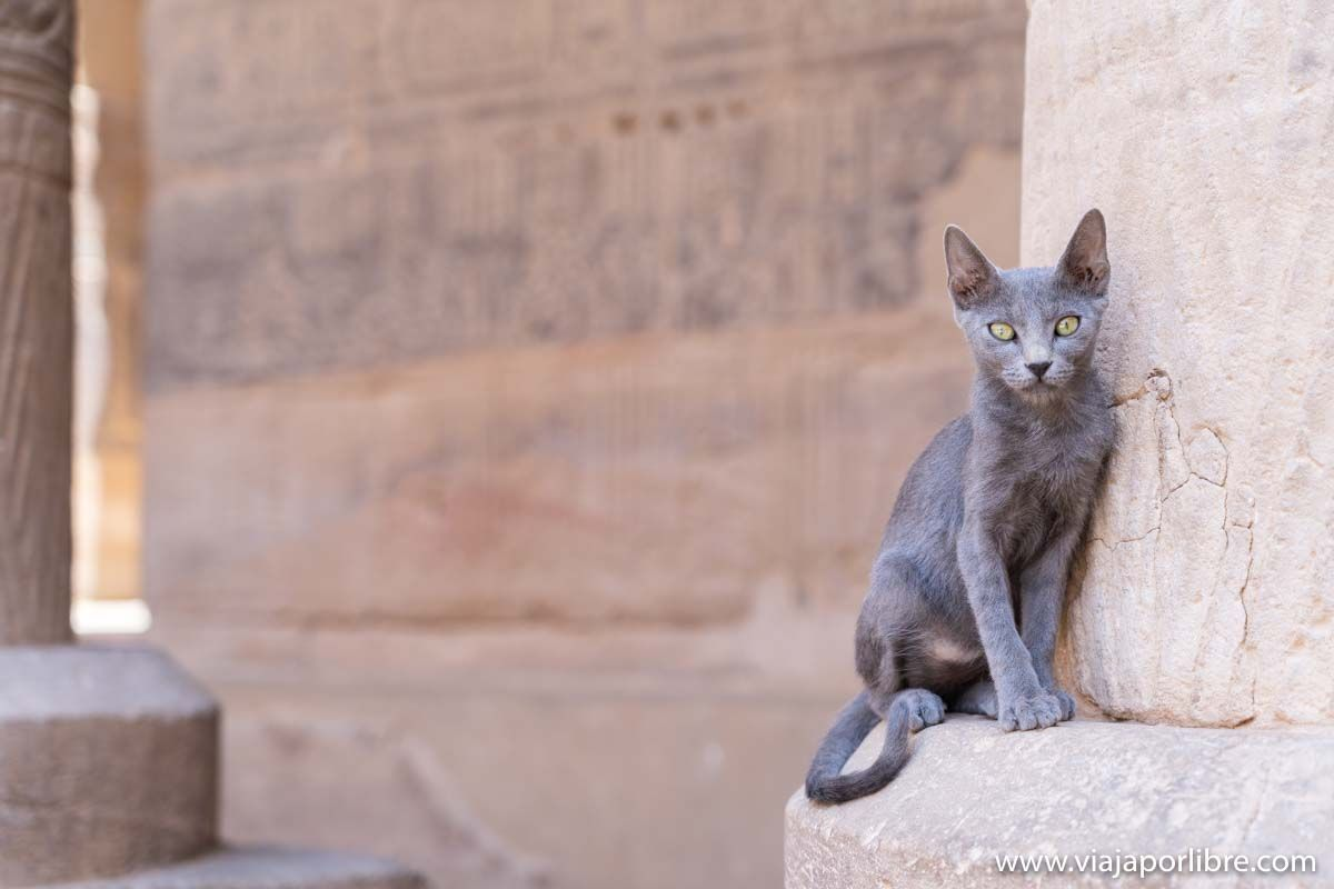 Visitar el templo de Filae/Philae en Egipto