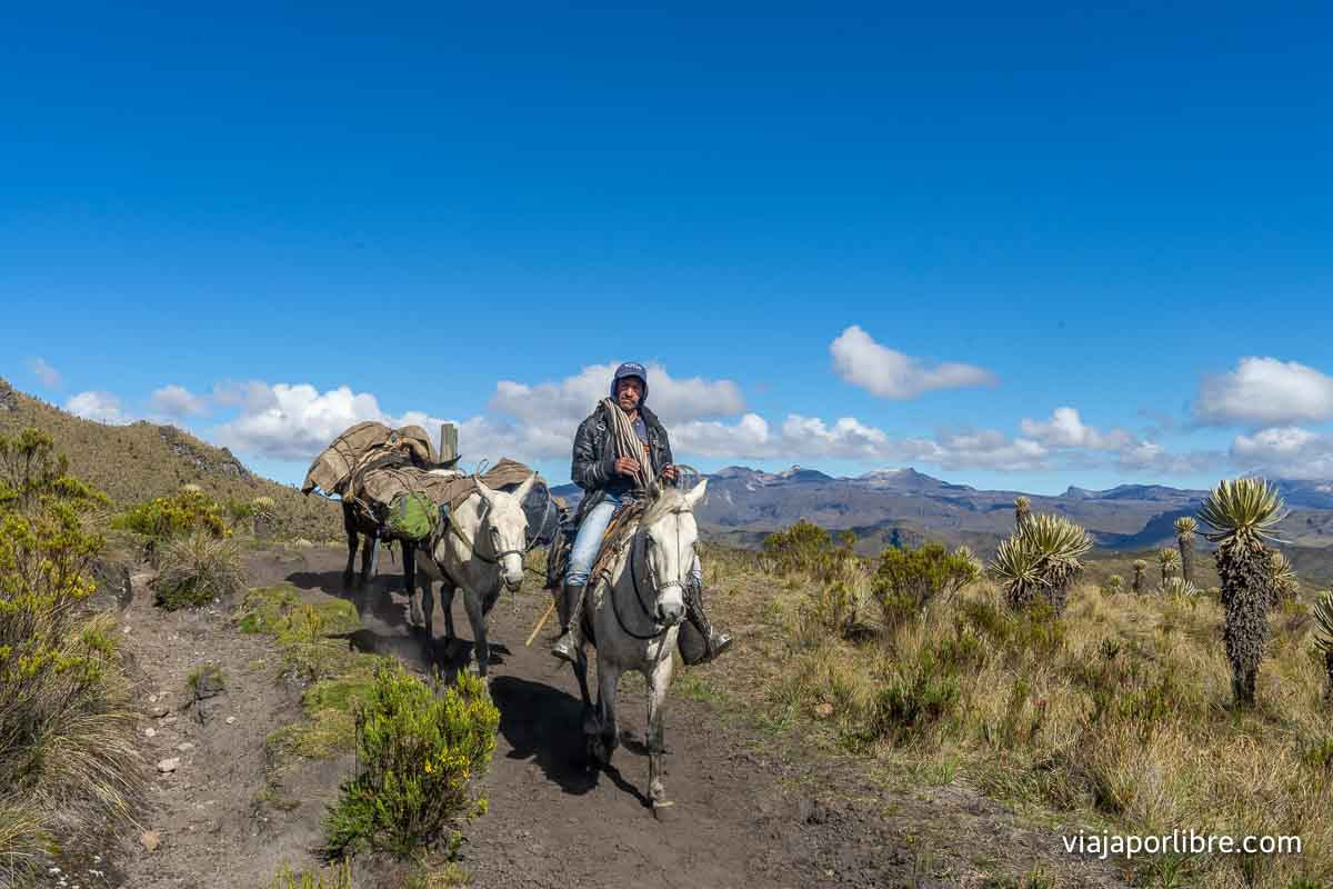 Caballos y mulas