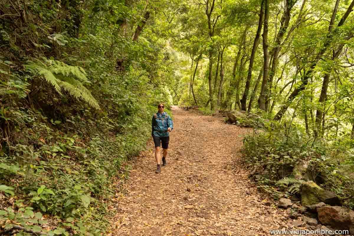 Bajando por el bosque