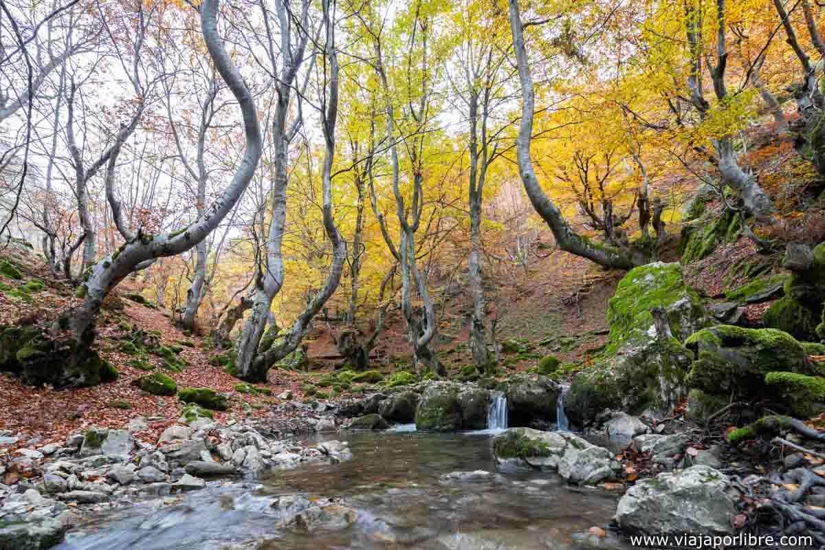 El río que cruza el hayedo