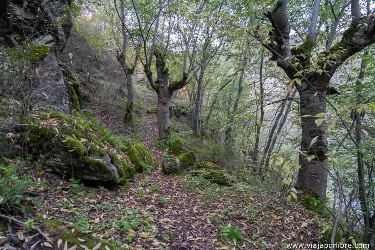 Bosques en las Arribes